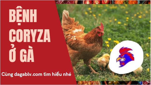 Giải đáp Bệnh Coryza ở gà