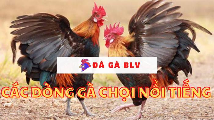 Các dòng gà chọi nổi tiếng