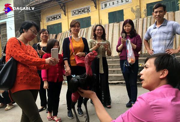 Khách du lịch nghe giới thiệu về gà chọi Thổ Hà