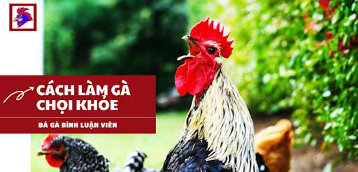 Cách làm gà chọi khỏe
