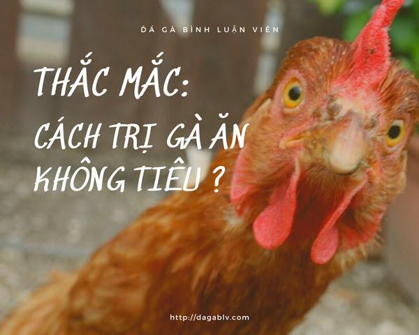 cách trị gà ăn không tiêu