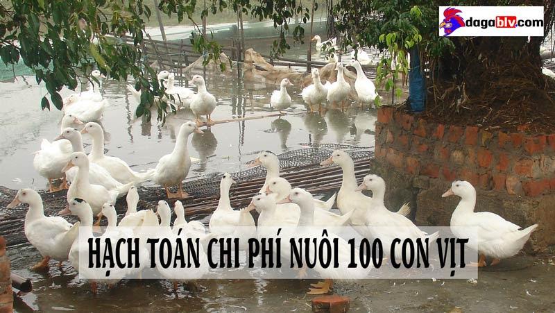 Chi phí nuôi 100 con vịt là bao nhiêu?