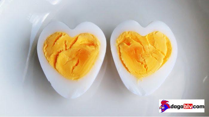 cho gà chọi ăn lòng đỏ trứng