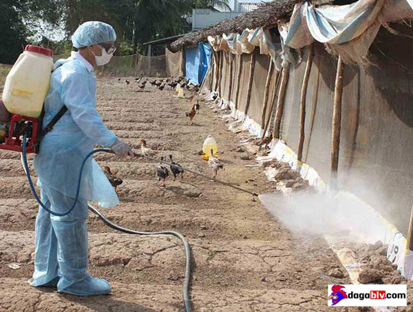 Đảm bảo an toàn sinh học chăn nuôi gà