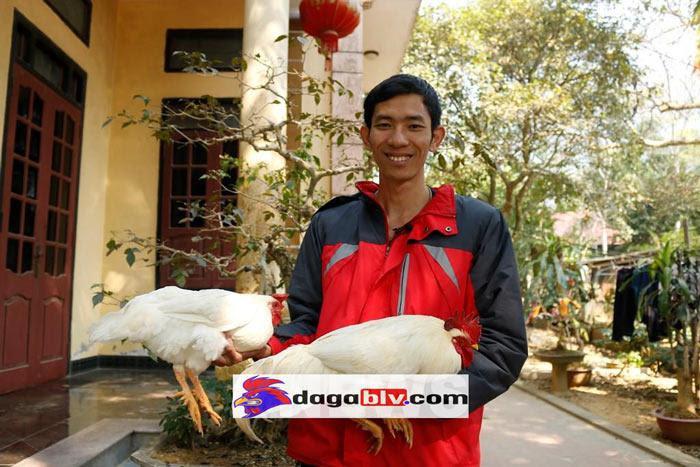 vlogger nuôi gà chín cựa